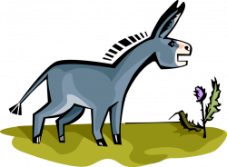Donkey or Ass - Vector Image