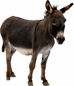 Donkey PNG images free download