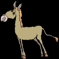 Jackass Male Donkey - Vector Image