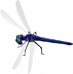 Clipart - Dragonfly