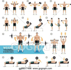 Vector Illustration - Dumbbell exercises weight training ...