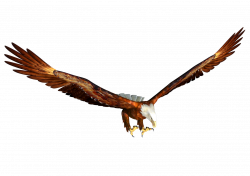 Flying Eagle Clipart at GetDrawings.com | Free for personal use ...