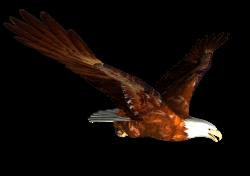 animated Bald eagle Flying PNG Image - PurePNG | Free transparent ...
