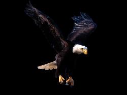 41 units of Eagle Images