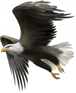 Bald Eagle Bird Golden eagle Clip art - Flying Eagles 500*615 ...