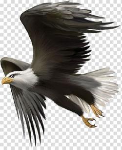 Bald eagle , Bald Eagle Bird Golden eagle , Flying Eagles ...