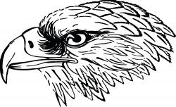 Falcon clipart eagles pencil and in color falcon - ClipartPost