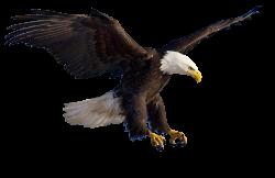 Bald Eagle Clip art - Flying Eagles 972*632 transprent Png Free ...