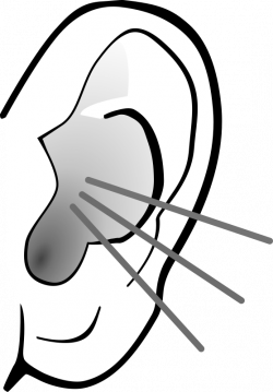 28+ Collection of Ear Clipart Black And White Png | High quality ...