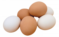 Eggs PNG image, free download PNG pictures of eggs