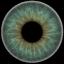 iris texture, png at 150ppi on transparent | Глаза | Pinterest ...