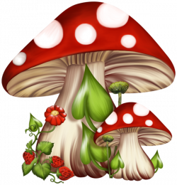 Toadstools are linked to fairies, it is thought that if you step ...