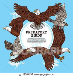 Vector Art - Predatory birds, sketch eagle or falcon ...