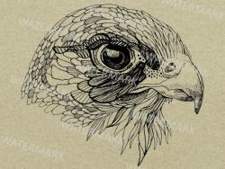 falcon clipart, hand drawn bird illustration, line art, png, commercial  use, printable, sketch, line art, black line