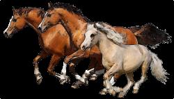 Clip Art of Horses | Pinterest | Clip art and Horse