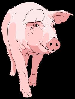 nice weekend pig - Google zoeken   Piggys   Pinterest   Nice weekend ...