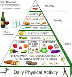honovylys: food chain pyramid