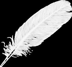 Large White Transparent Feather PNG Clipart | Digiscrap Photoshop ...