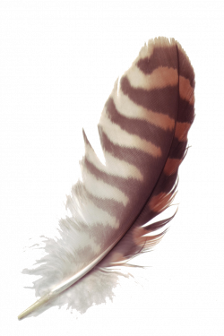 Feather PNG Transparent Images | PNG All