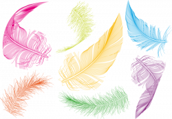 Bird Feather Goose Clip art - Colored feathers 800*555 transprent ...