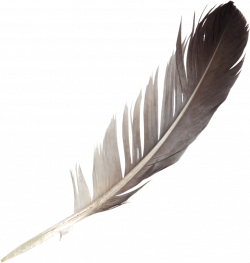 PNG Feathers Free Transparent Feathers.PNG Images. | PlusPNG