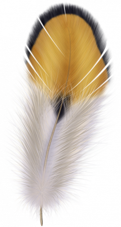 feather01.png | Feathers, Clip art and Colored pencil tutorial