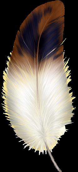 Brown y la pluma blanca Clipart … | plumas - feathers ...
