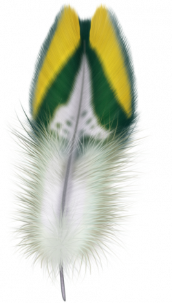 FEATHER | Feathers | Pinterest | Feathers and Illustrations