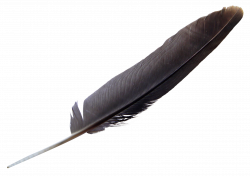 Feather PNG Image - PurePNG   Free transparent CC0 PNG Image Library