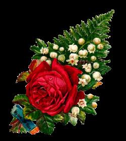 Antique Images: rose clip art   Printables   Pinterest   Clip art ...