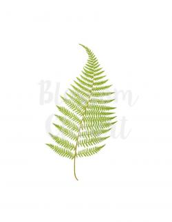 Fern Leaf Clipart, Vintage Botanicals PNG for Invitations, scrapbook, Card  making, collage, prints Digital Download - 1397