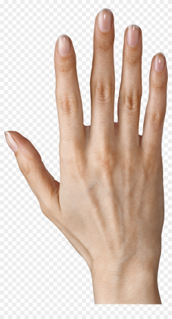 Hand Showing Five Fingers Png Clipart Image - Fingers ...