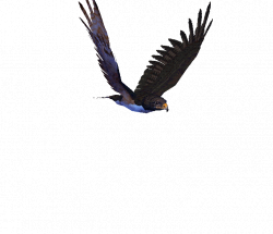 Great Animated Eagle Gifs at Best Animations | I love birds ...