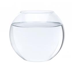 Fish Bowl Full Of Water Png & Free Fish Bowl Full Of Water ...