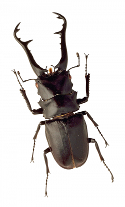 Insect PNG Image - PurePNG   Free transparent CC0 PNG Image Library