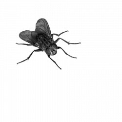 Insect PNG Transparent Images | PNG All