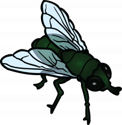 Collection of 14 free Flies clipart winged insect. Download on ubiSafe