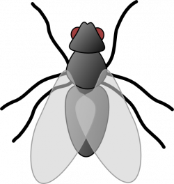 Fly Clip Art   Clipart Panda - Free Clipart Images