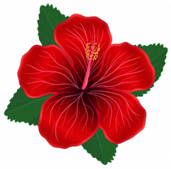 Red Flower PNG Clipart Image | Clip Art | Pinterest | Clipart images ...