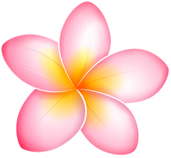 Page 2 - Plumeria Flower Bud Flower High Resolution Stock Photography and  Images - Alamy