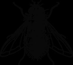 Peterm Housefly Clip Art at Clker.com - vector clip art online ...