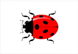 Collection of Flying Ladybug Clipart | Buy any image and use it for ...