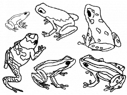 amazon com frogs stained glass coloring book 9780486412580   a ...