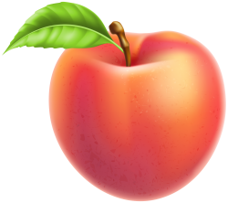 Peach Fruit PNG Clipart | Gallery Yopriceville - High ...
