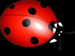 Gentle Ladybugs are Actually Cannibals – Laidback Gardener