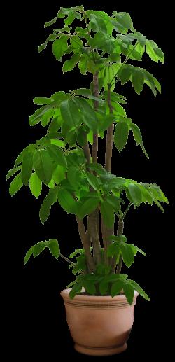 FREE DOWNLOAD! | drzewa | Pinterest | Free, Photoshop and Plants