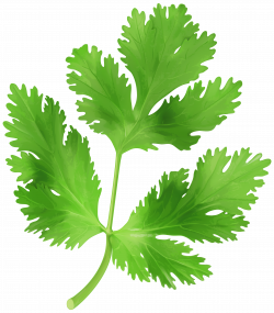 Images of Chopped Parsley Png - #SpaceHero