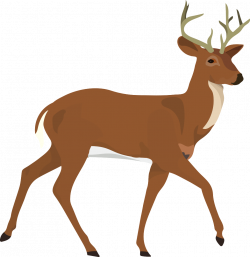 Buncee - Reindeer Biology Honors Biology B4
