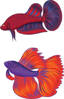 Siamese Fighting Fish Clip Art, Vector Images ...