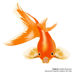 Goldfish and Betta | Mr. Fatta